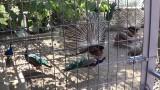Монастырь Влатадон в Салониках: Греция 2013.